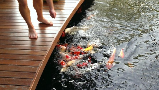 Bussaba Bangkok : Koi pond.  They let you feed them!