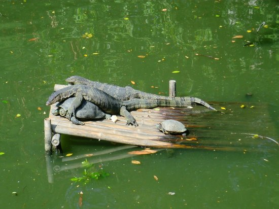 Dusit Zoo: Lizards