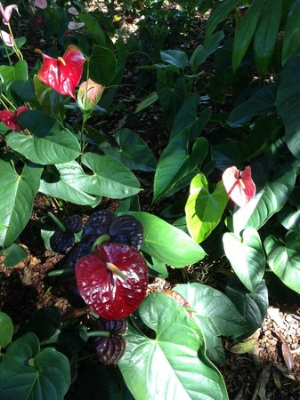 Hawaii Tropical Botanical Garden : colors