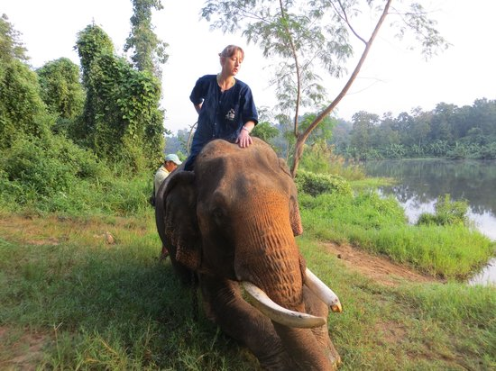 Thai Elephant Conservation Center: realized too late