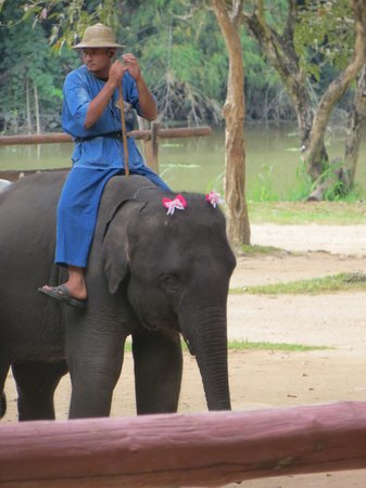Thai Elephant Conservation Center : really?
