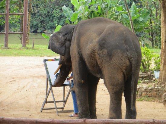 Thai Elephant Conservation Center: instinct?