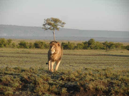 Kingi Safaris - Private Day Tours: scare face