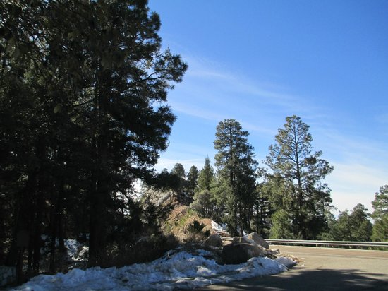 Mt. Lemmon Scenic Byway: Pine forests near the summit