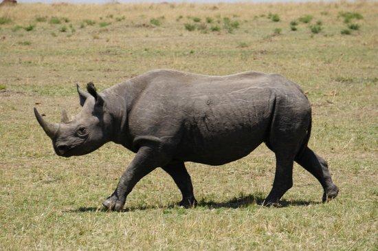 TrueAfrica - The Safari Company Day Tours: Black Rhino!