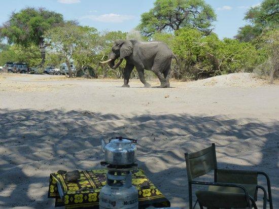 Wilderness Safaris Savuti Camp: Elefanten laufen hier direkt durchs Camp