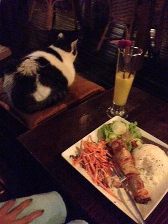 Luna Lounge Thong Nai Pan Noi: a 'fat cat' joined us for dinner!