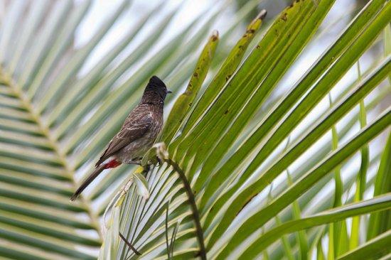 Dalmanuta Gardens - Ayurvedic Resort & Restaurant: Bird 1