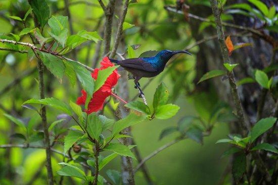 Dalmanuta Gardens - Ayurvedic Resort & Restaurant: Bird 3