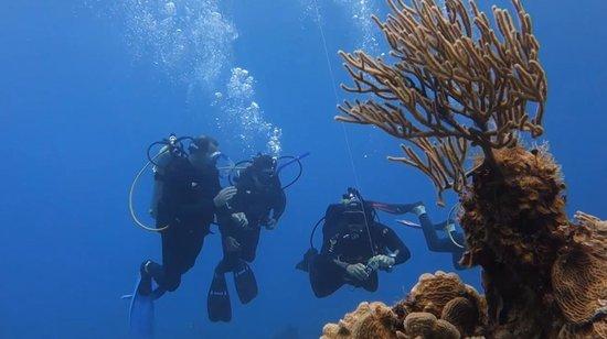 Dressel Divers: 04