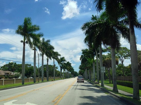 McGregor Boulevard: Palms on either side! Beautiful!