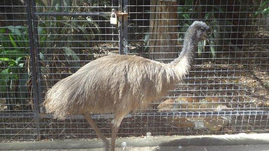 Sydney Tours-R-Us: Featherdale Wildlife Park