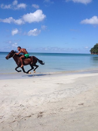 Sirius Hotel & Dive Center: At the other end of the beach, they race horses every Saturday.
