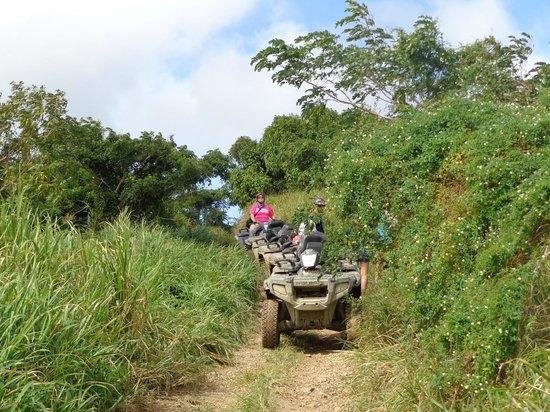 Gecko's Island Adventures: top of mountain in St. Croix 1/6/14