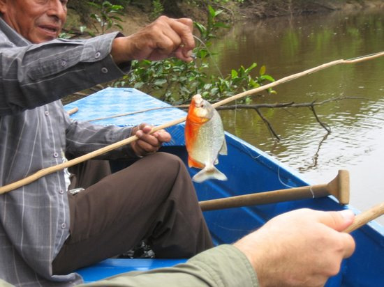 Amazonia Expeditions' Tahuayo Lodge : Fishing for piranha with our jungle guide.