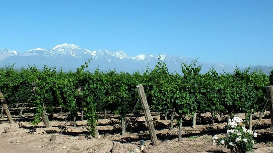 Uncorking Argentina Private Tours : Mendel Winery's Vineyards