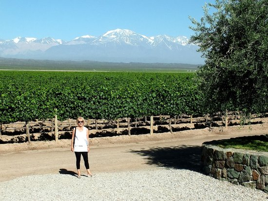Uncorking Argentina Private Tours : Pulenta Winery's Vineyards with an Andes view.