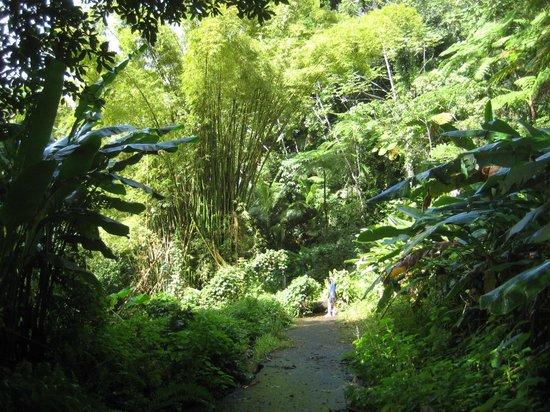 Casa Flamboyant: Hiking nearby in El Yunque
