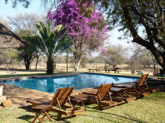 Mziki Safari Lodge: Pool