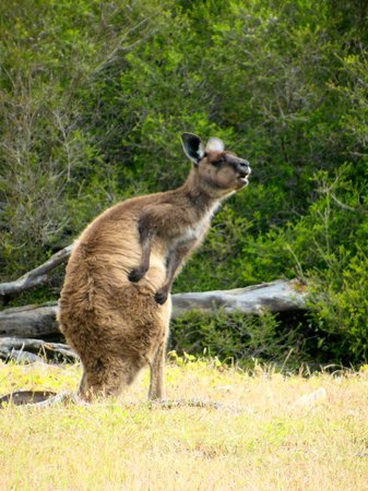 Exceptional Kangaroo Island: Got an itch?