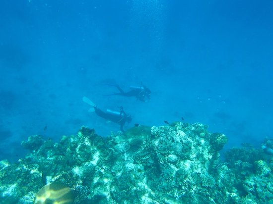 Poseidon Outer Reef Cruises : excellent dives