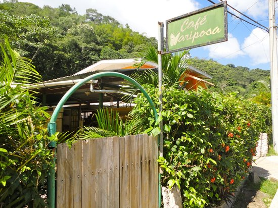 The cafe - Picture of Cafe Mariposa, Lopinot - TripAdvisor