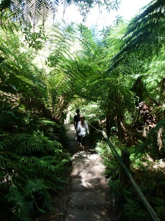 Tree Fern Gully Track: 1000 Steps