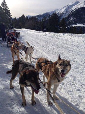 Xalet Verdu Hotel: Excursión en trineo con perros