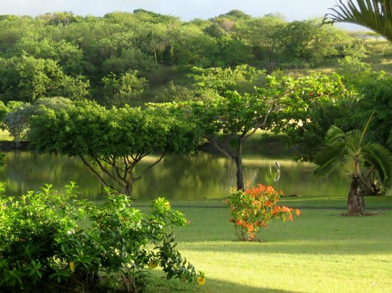 Grenadian by Rex Resorts: Hotel grounds - pond with birds