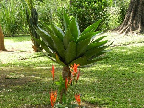 Casa Batsu: beautiful plant