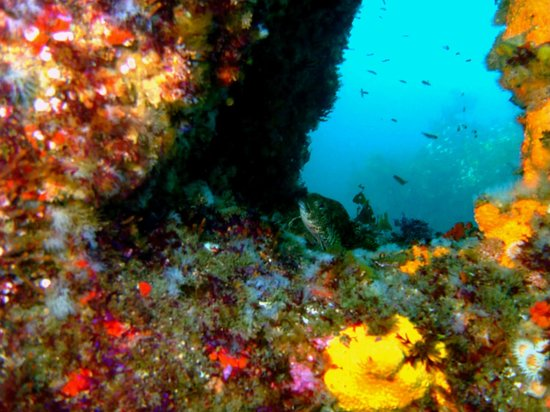 Bad Weather But Ok In The End Review Of Cathedral Cove Dive