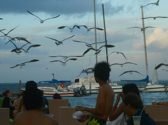 Ocean Spa Hotel: Muitas gaivotas na praia