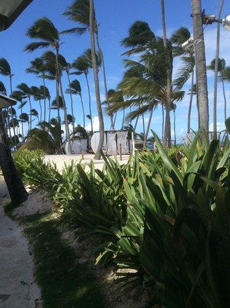 Dreams Palm Beach Punta Cana: Beautiful Beach