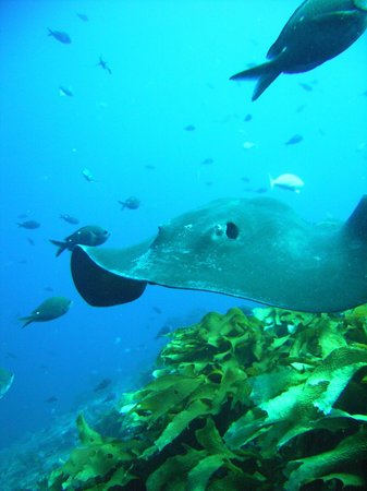Cathedral Cove Dive & Snorkel: Sting ray