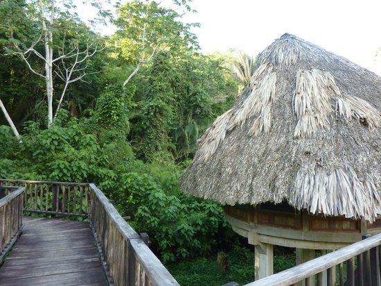 Pook's Hill Lodge: thatch roofed bird walk cottage