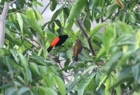 Punta Gabriela : Birds