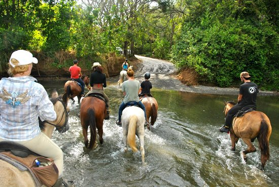 Horsejungle: Crossing river