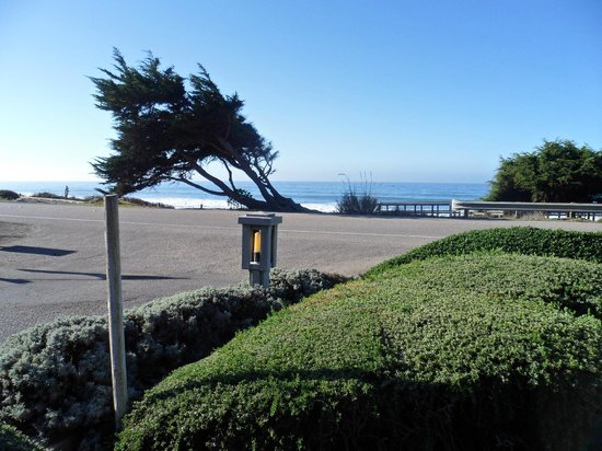 FogCatcher Inn : View of the ocean from one of the benches (it was not windy the tree is really like that :)