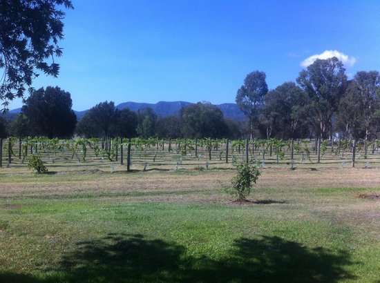 Hunter Valley Resort: View from our room