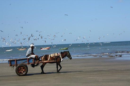 Barcelo Montelimar : plage au village des pêcheurs