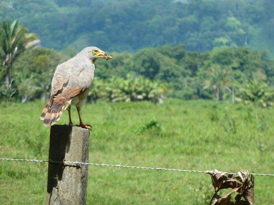 Lapa Rios Ecolodge Osa Peninsula: Birding