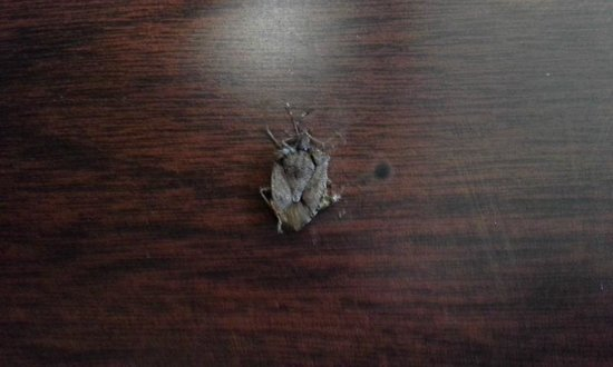 Red Roof Inn Roanoke - Troutville: The stinkbug I dispatched