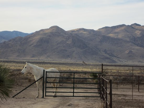 Hideout Ranch: horses and mountains