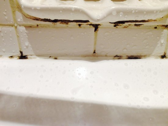 Parmelia Hilton Perth: Mold on bath tiles