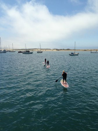 456 Embarcadero Inn & Suites: Stand Up paddling on the Bay