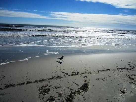 Pelican's Point: A perfect Hilton Head Day