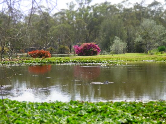 The Convent Hunter Valley: Pond