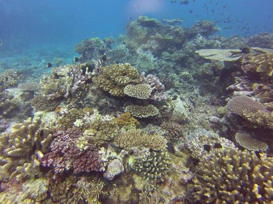 Lalati Resort & Spa: Coral