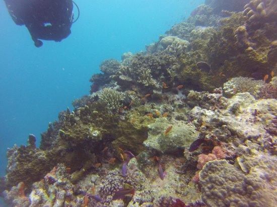 Lalati Resort & Spa: Coral & more