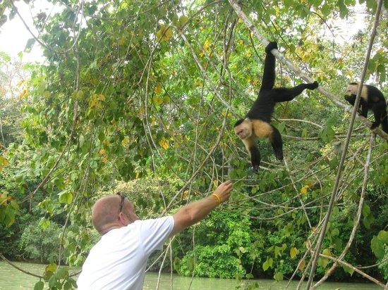 Barefoot Panama: Feeding the Capuchin monkeys